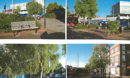 Crossroads regeneration needs you help with planting