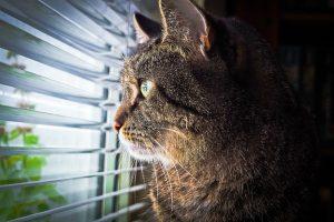 cat-1757919_640
