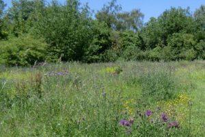 cropped-cuddington-meadows-2
