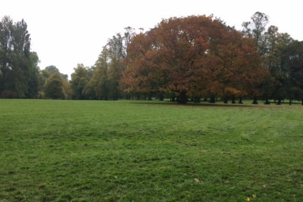 Join the Friends of Cheam Park on Saturday as they plant new trees
