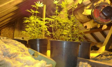 Morning forced entry by police discovers cannabis