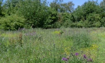 Download Sutton Ecology trail leaflet