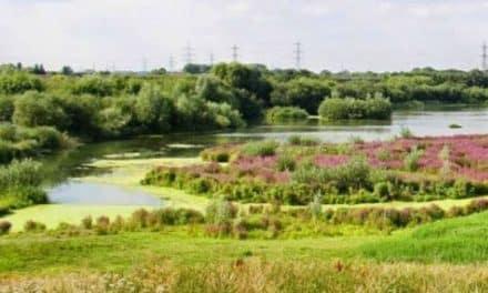 Beddington farmland walk taking place on Thursday