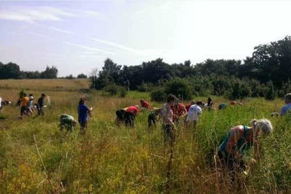 "Woodland Trust need help to tackle ""Golden Rod"" in Warren Farm"