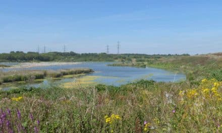Latest chance to see transformation of Beddington conservation site