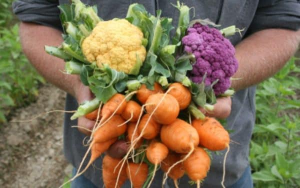 Book your place on the beginners course for food growing